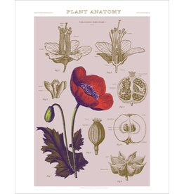 Vivid Print Bee Waeland | Educational Series: Plant Anatomy I