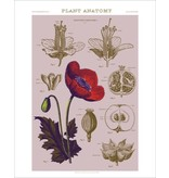 Vivid Print Bee Waeland | Educational Series: Plant Anatomy I