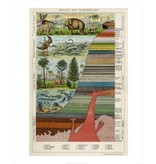 Vivid Print Paleontology
