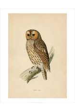 Vivid Print Tawny Owl