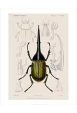 Bee Waeland   Educational Series: Beetle