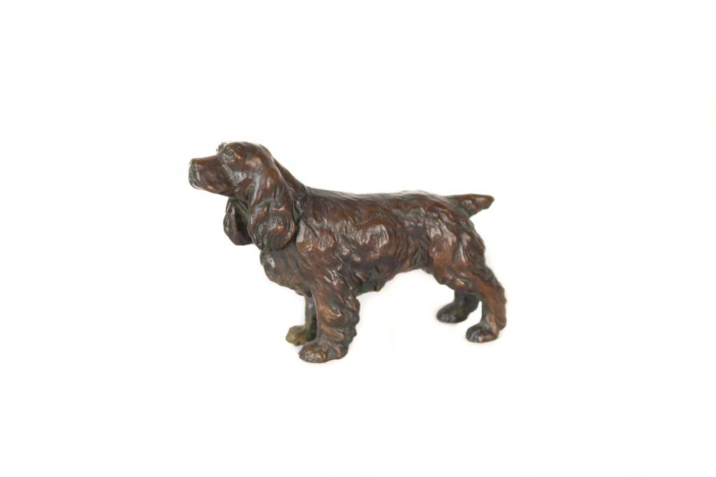 Bronze Cocker Spaniel