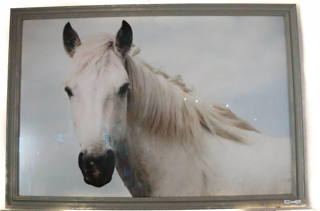 Icelandic White Horse Photo