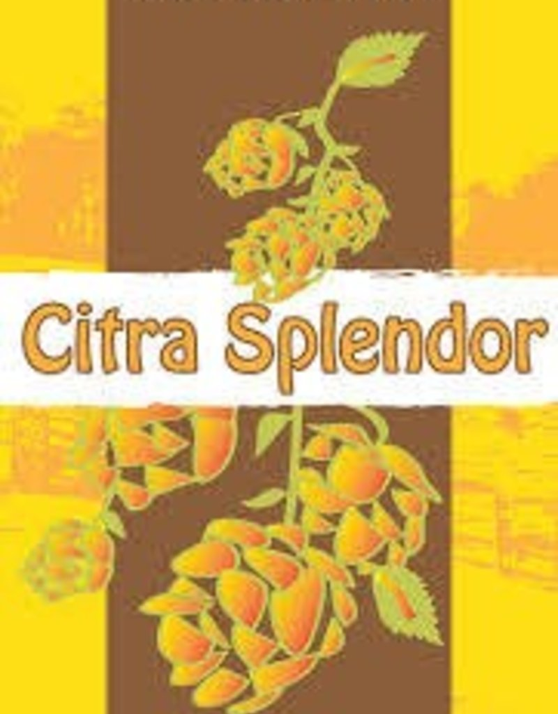 Manor Hill Citra Splendor 4 pack cans