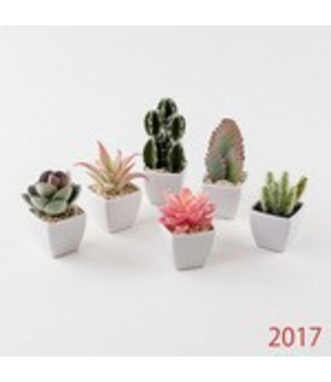 One Hundred Eighty Degrees Succulent Small