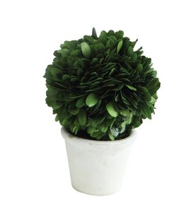"Creative Co-Op Boxwood Topiary 6"" White Clay Pot"