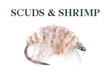 SCUDS & SHRIMP