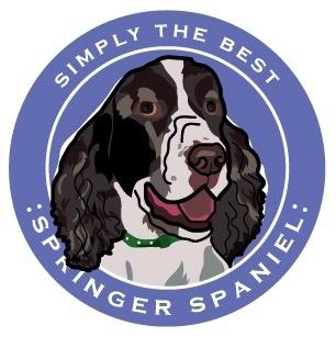 Paper Russels Springer Spaniel Car Magnet