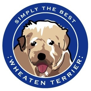 Paper Russels Wheaton Terrier Car Magnet