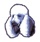 GoldenDoodle, LLC Poodle Car Magnet