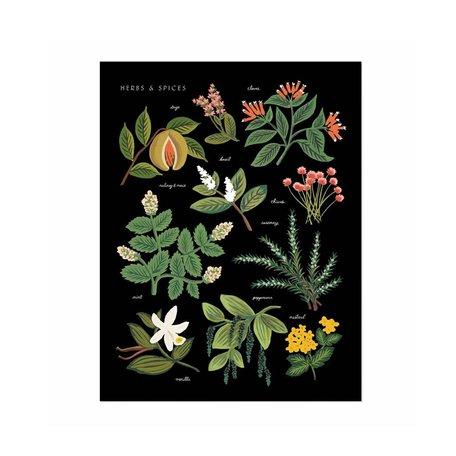 Herbs & Spices Print 11x14 SALE