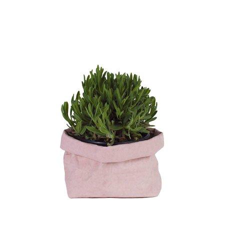 Paper Bag -Rose Quartz