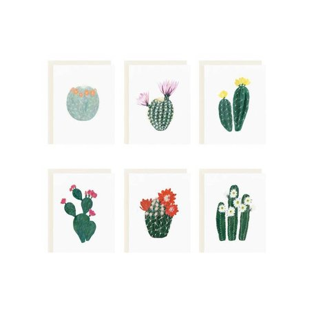 Flowering Cacti Assorted Set/6