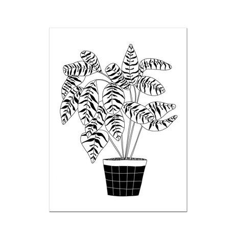 Plant 02 Art Print -12x16<br /> Tiger Plant