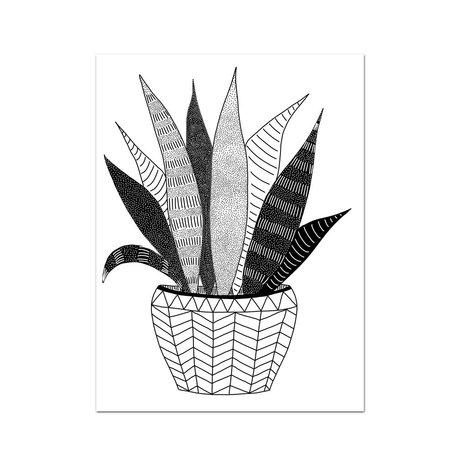 Plant 03 Art Print -12x16<br /> Snake Plant