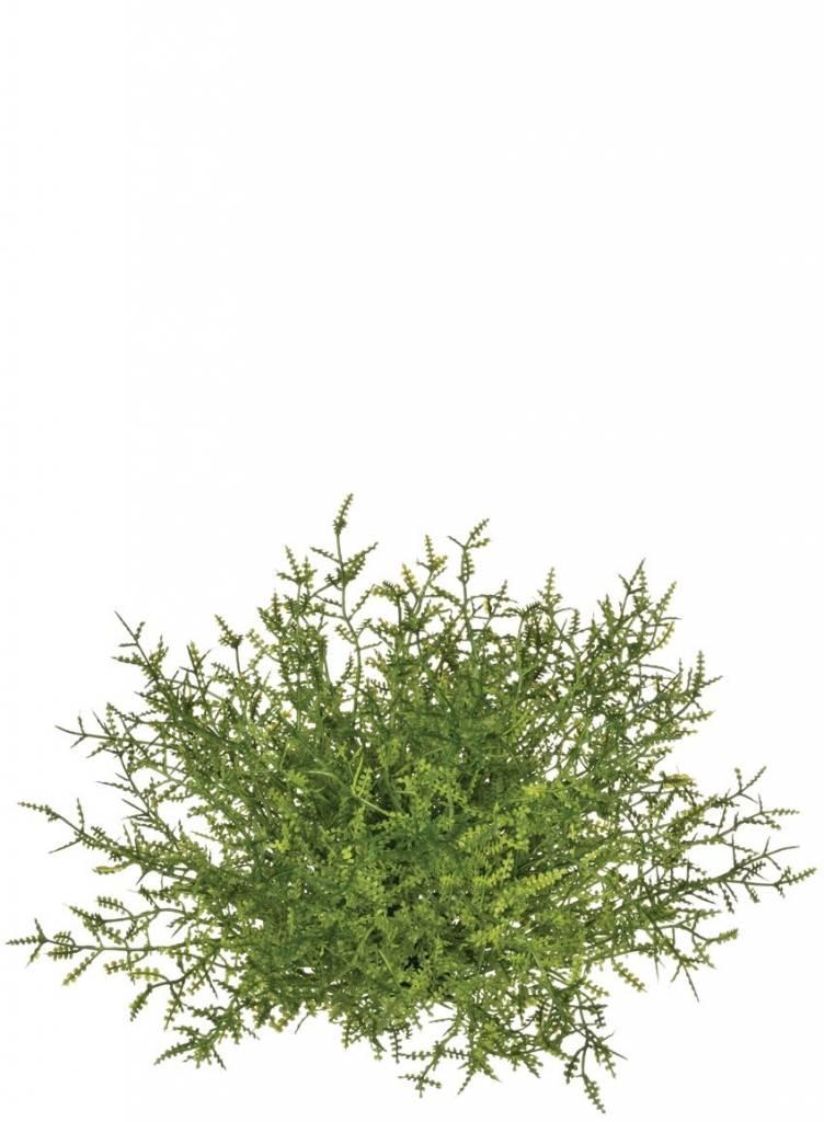 """6"""" Feather fern 1/2 orb"""
