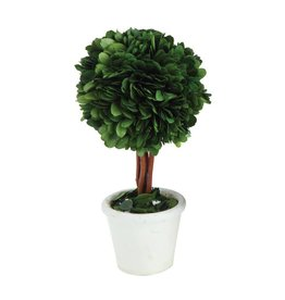 Preserved Boxwood Topiary Single Ball w/ Stem in White Clay Pot