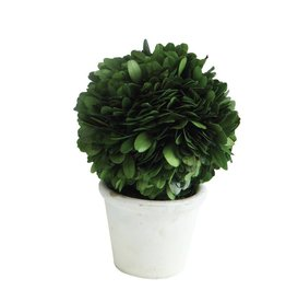 "3"" Round x 6-1/4""H Preserved Boxwood Topiary Single Ball w/ Stem in White Clay Pot"