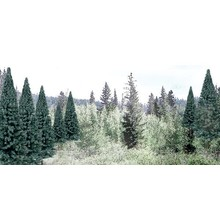 "Woodland Scenics Blue Spruce Tree Value Pack - Ready Made Trees(TM) -- 2 - 4""  5.1 - 10.2cm pkg(18) # 1587"