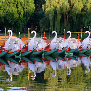 Swan Boats, Boston