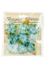 Petaloo International Baby Blooms