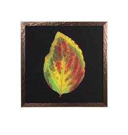 Hydrangea Leaf Print Framed Under Glass 20x20x1
