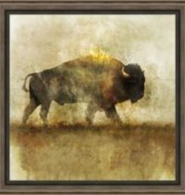 Peaceful Bison I Canvas 24x24