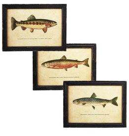 Framed Lake Fish Wall Art with Glass (3 asst)