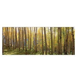 Yosemite Home Decor Sunlit Colorado Trees