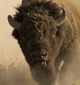 American Buffalo  60x40