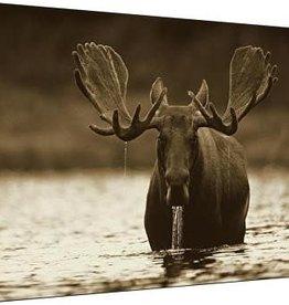 Bull Moose Rising 40x60