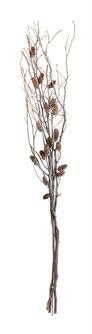 """Twig and Pinecone Branch--46"""""""
