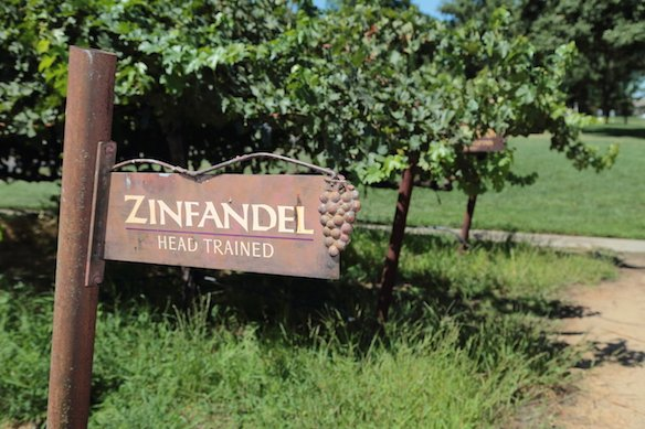 All About Zinfandel:  America's Heritage Grape