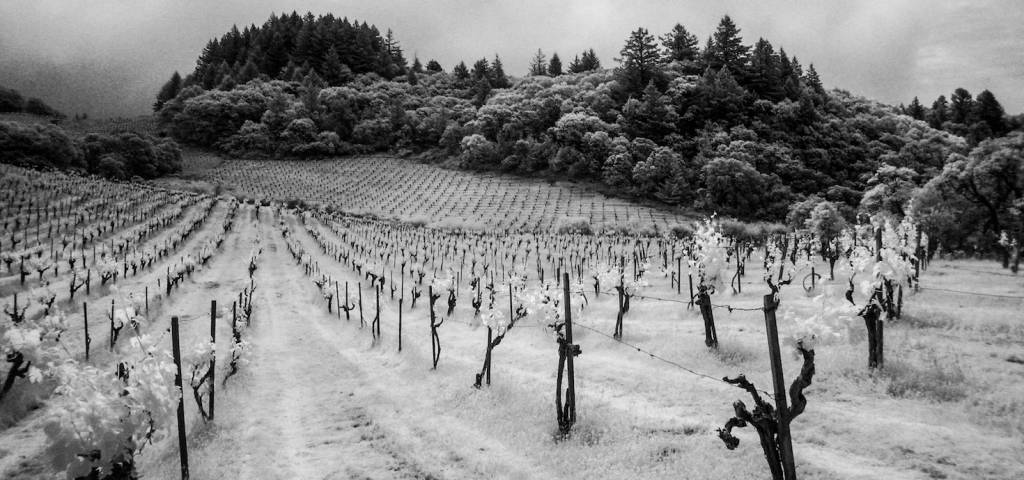 California Mountain Fruit--How Grapes Express Themselves in Higher Elevations