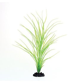 Aquaria UT PP GREEN HAIRGRASS 16IN