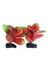 Aquaria (D) UT PP RED/GREEN BACOPA 2 POD 3IN