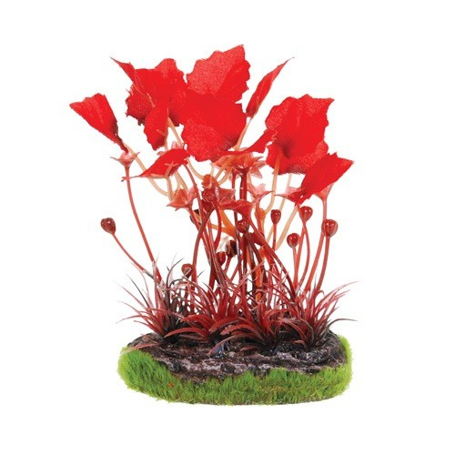 Aquaria (D) UT SM SCENE - MAPLE LEAF W/ RED GRASS (LC)