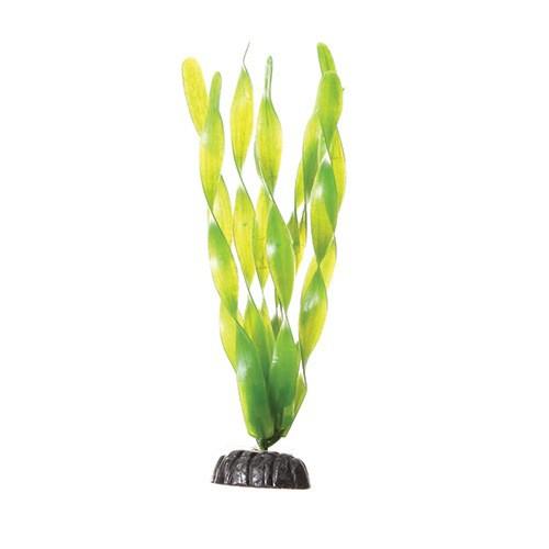 Aquaria (D) UT PP GREEN JUNGLE VAL 8IN (LC)