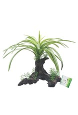 Aquaria (D) FL FountainPlant, L 25cm(10in) on Root (LC)