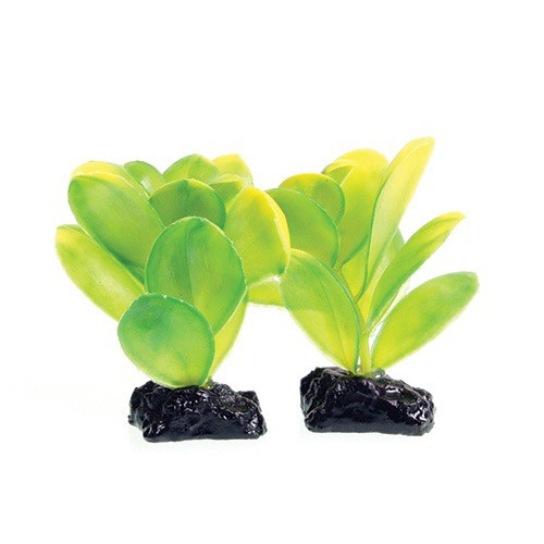 Aquaria (D) UT PP GREEN BACOPA 2 POD 3IN