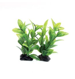 Aquaria (W) UT PP GREEN LUDWIGIA 2 POD 3IN