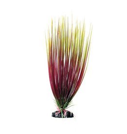 Aquaria UT PP RED/GREEN HAIRGRASS 12IN