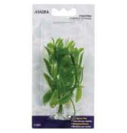Aquaria Marina Mini, Hygrophila 4in-V