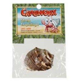 Reptiles (D) Crabworx Large Shells-V