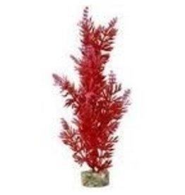 Aquaria (D) GARDEN CLUSTER BUSH PLANT LG RED