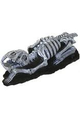 Aquaria (D) Fossil saber tooth
