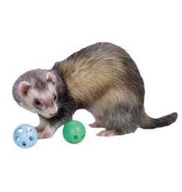 Small Animal (W) Ferret Plastic Bell Toys 2Pk
