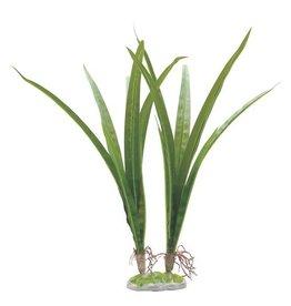 Aquaria (W) FL Acorus, Large 36cm (14.5in) w/ Base
