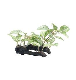 Aquaria (W) FL Orn. Af.Shde Lf on Log, 10cm (4in)