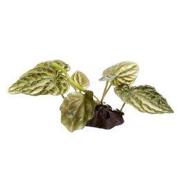 Aquaria (W) FL Lotus, Small, 10cm(4in) w/Base